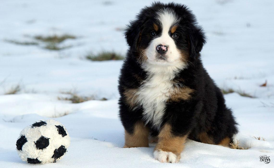 Soccer-Pupweb