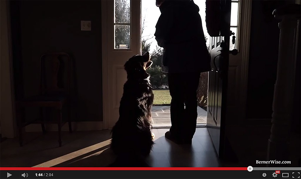Doorway manners: Training your Bernese Mountain Dog to wait (Video)