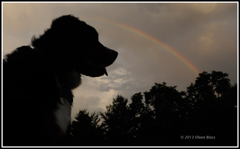 Teddy and the Rainbow