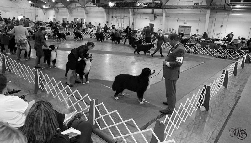 So where do you stand to get great photos at a dog show?
