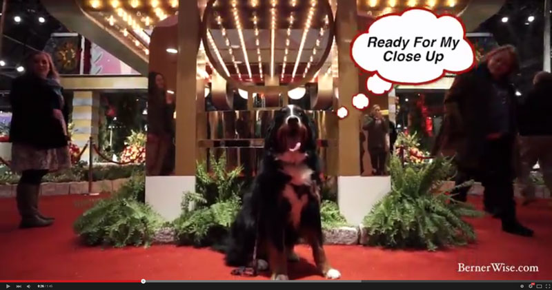 Fido Friday: Teddy does Yappy Hour at Philly Flower Show