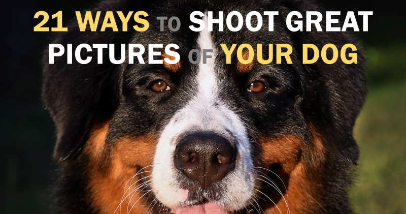 21 ways to shoot great dog pictures