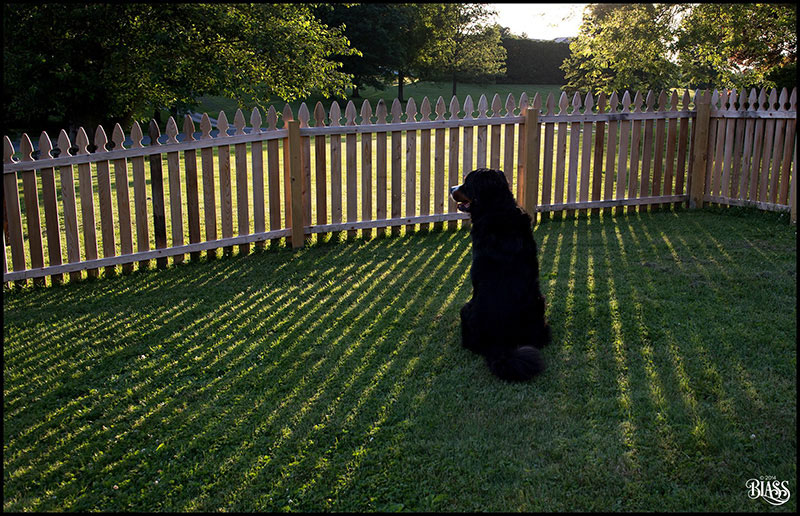 The difference shadows make. Teddy in the evening light. © 2014 Eileen Blass