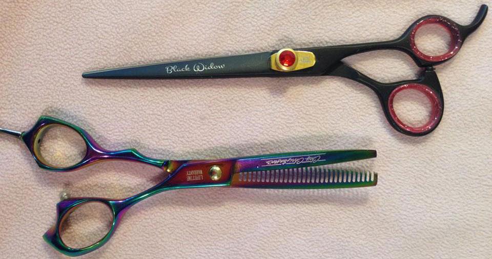5 must-have grooming tools every Berner owner needs