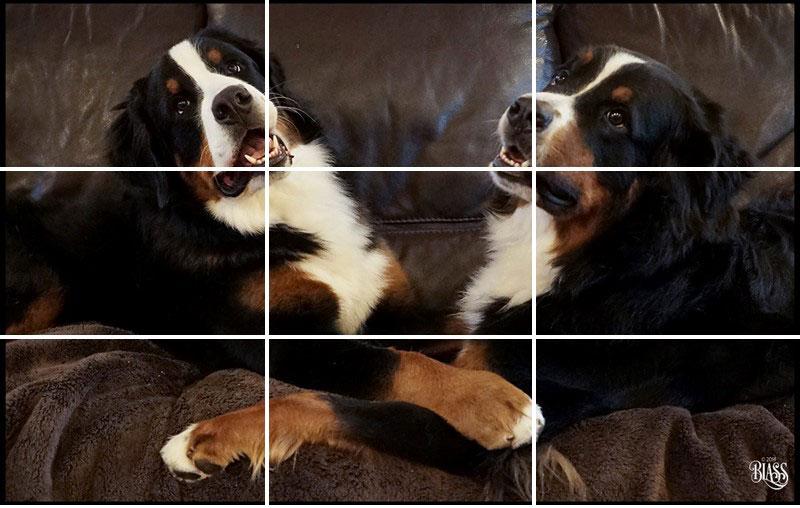dogcouchphotoweb