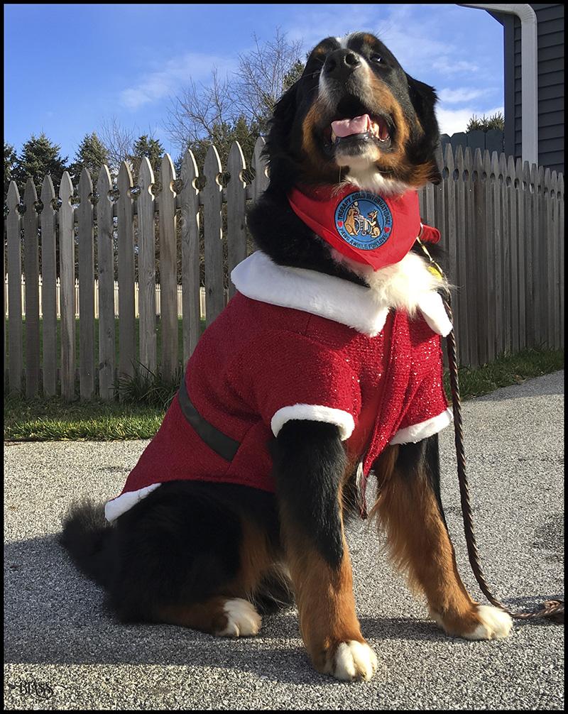Teddy's Santa Outfit