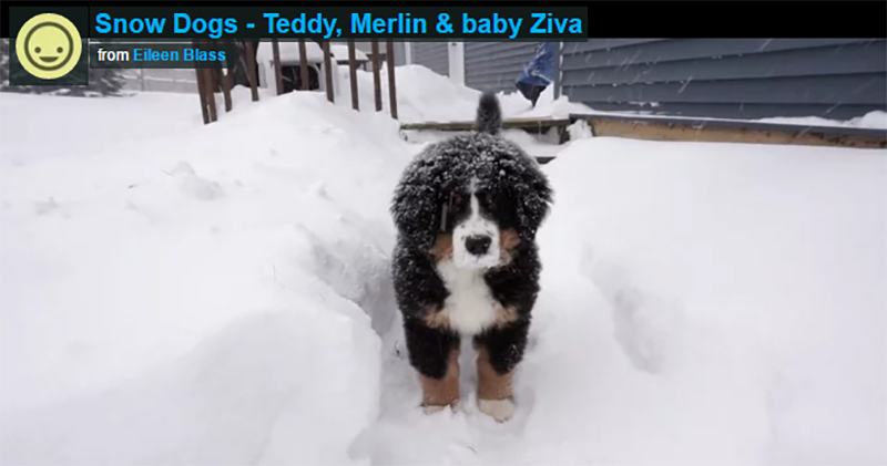 Snow: Teddy, Merlin and baby Ziva